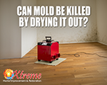 Can Mold Be Killed by Drying it Out