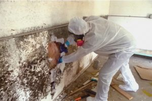 Is Mold Behind Walls Costly