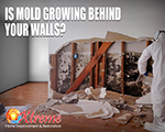 Is Mold Growing Behind Your Walls